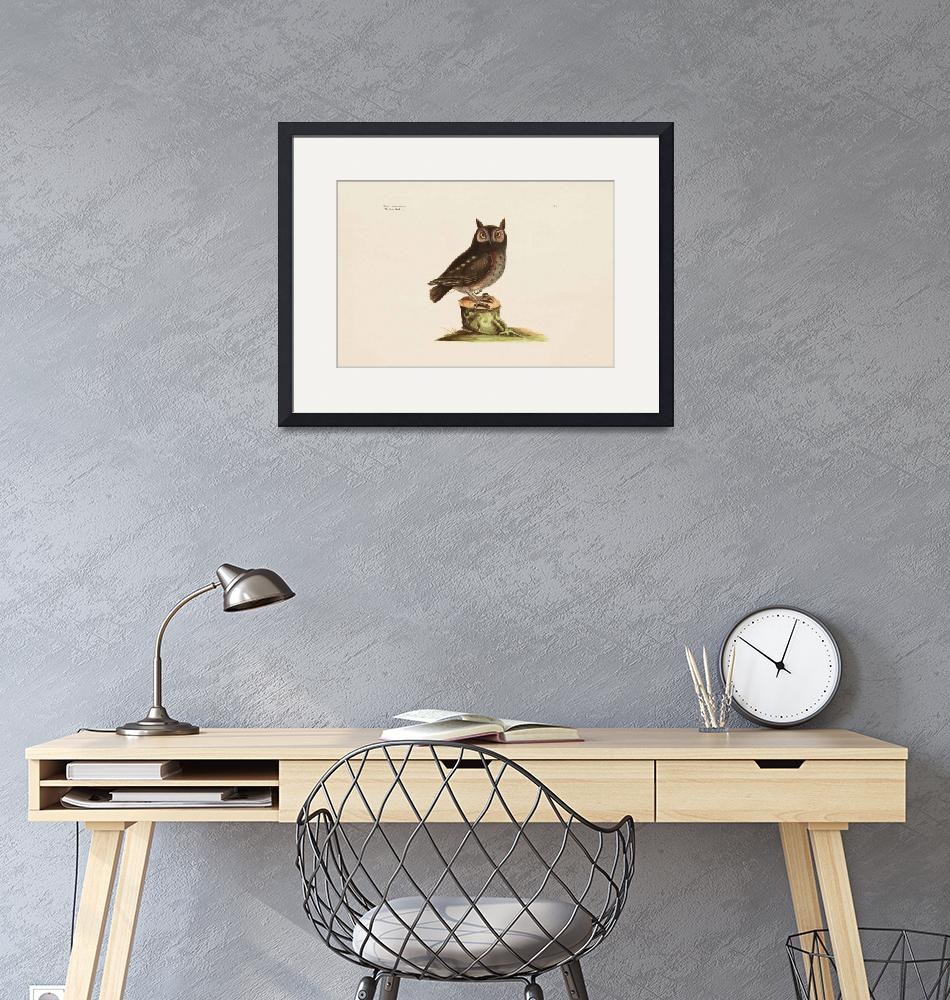 """""""Mark Catesby~The Little Owl, The Natural History o""""  by Old_master"""