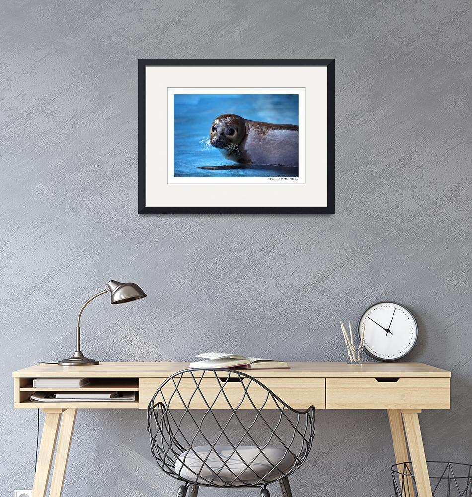 """""""Harbour Seal""""  (2010) by WildVisuals"""