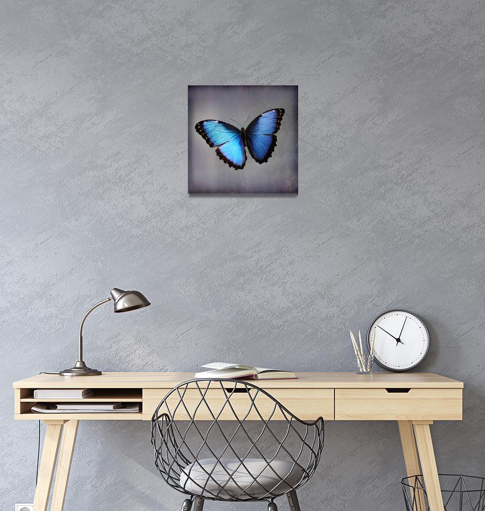 """""""Blue Morpho Butterfly Square""""  (2015) by KsWorldArt"""