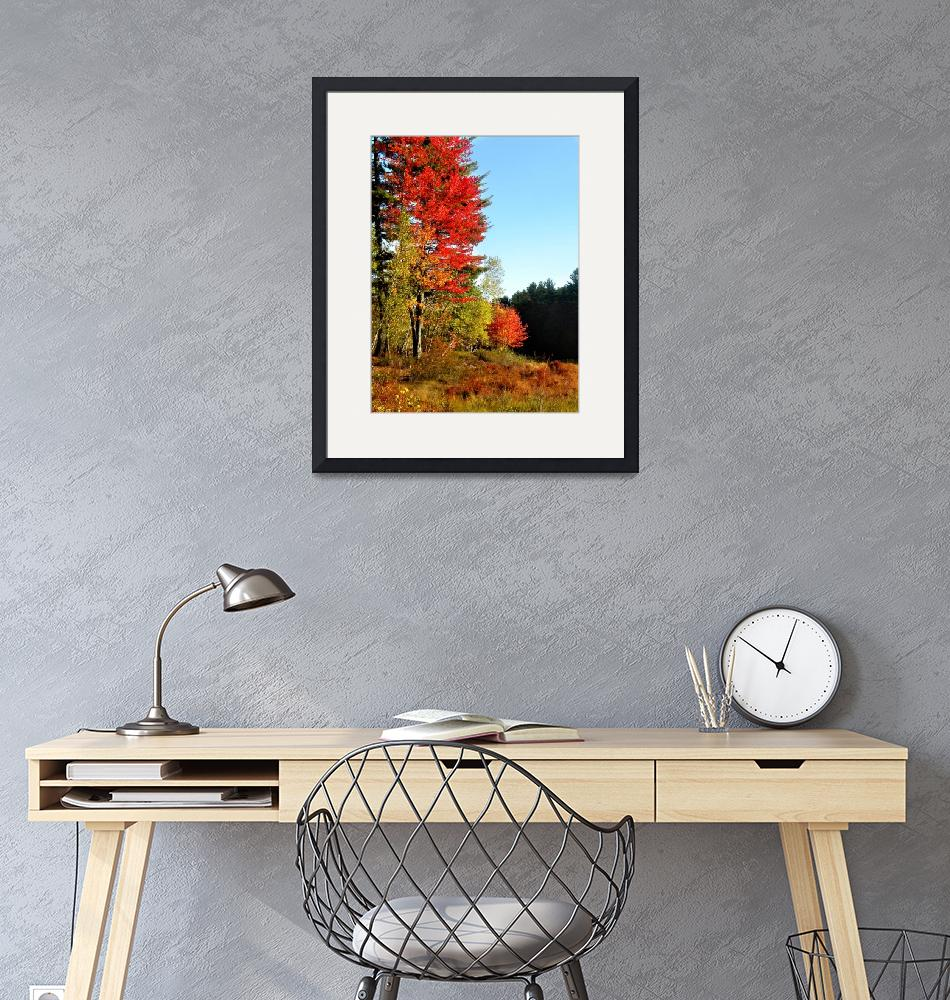 """New England Foliage""  (2015) by TRELDesign"