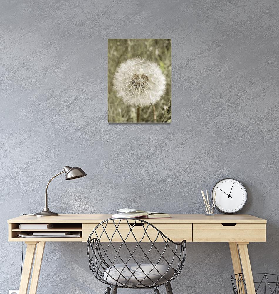 """Dandelion flower soft nature design""  (2010) by ecoDesign"