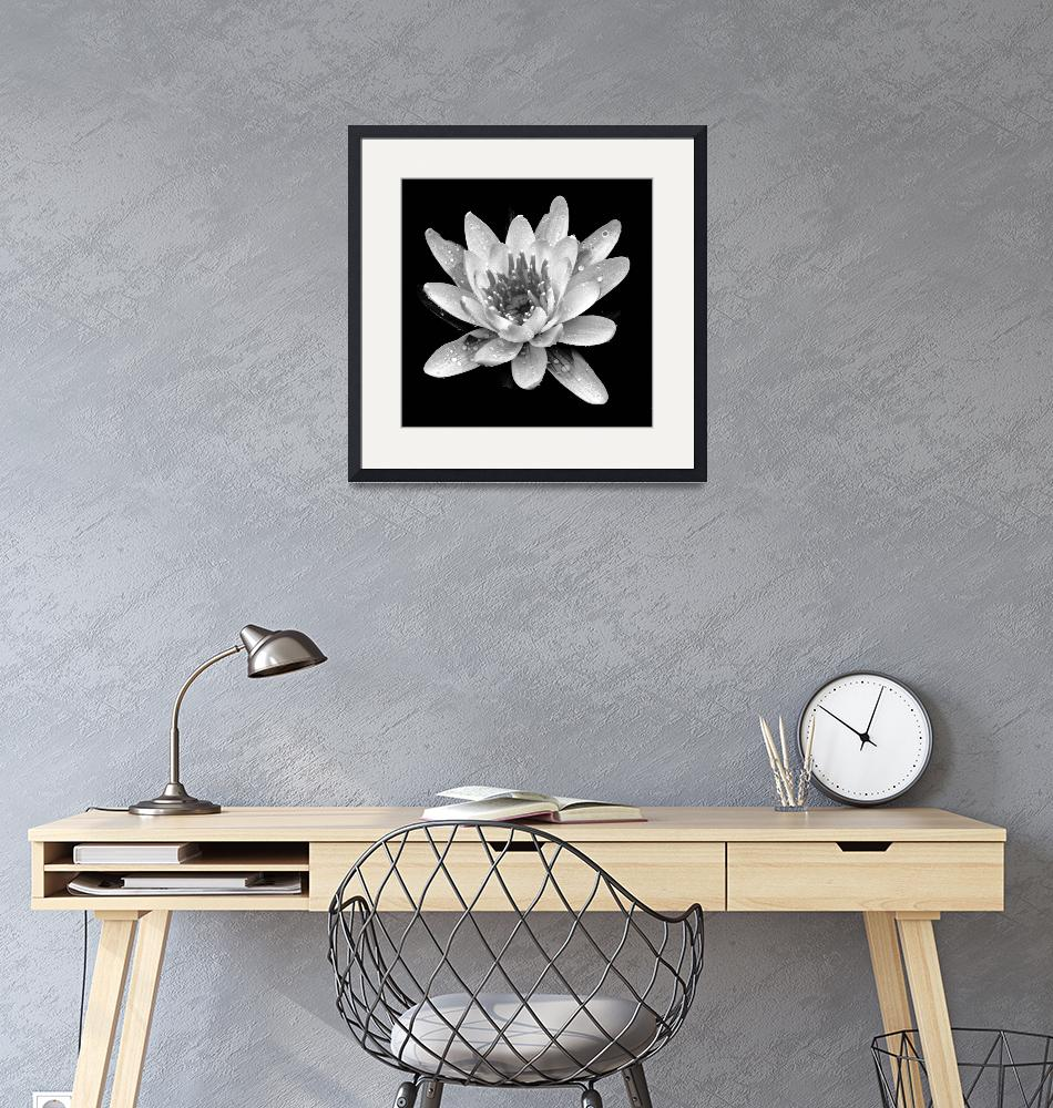 """Water Lily In Black And White""  (2009) by bavosiphotoart"
