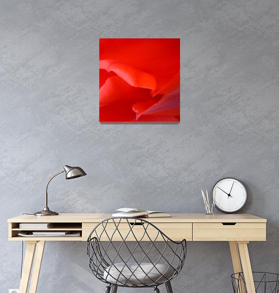 """""Red Tulip 5"" #5042315.0678 (4)""  (2015) by achimkrasenbrinkart"