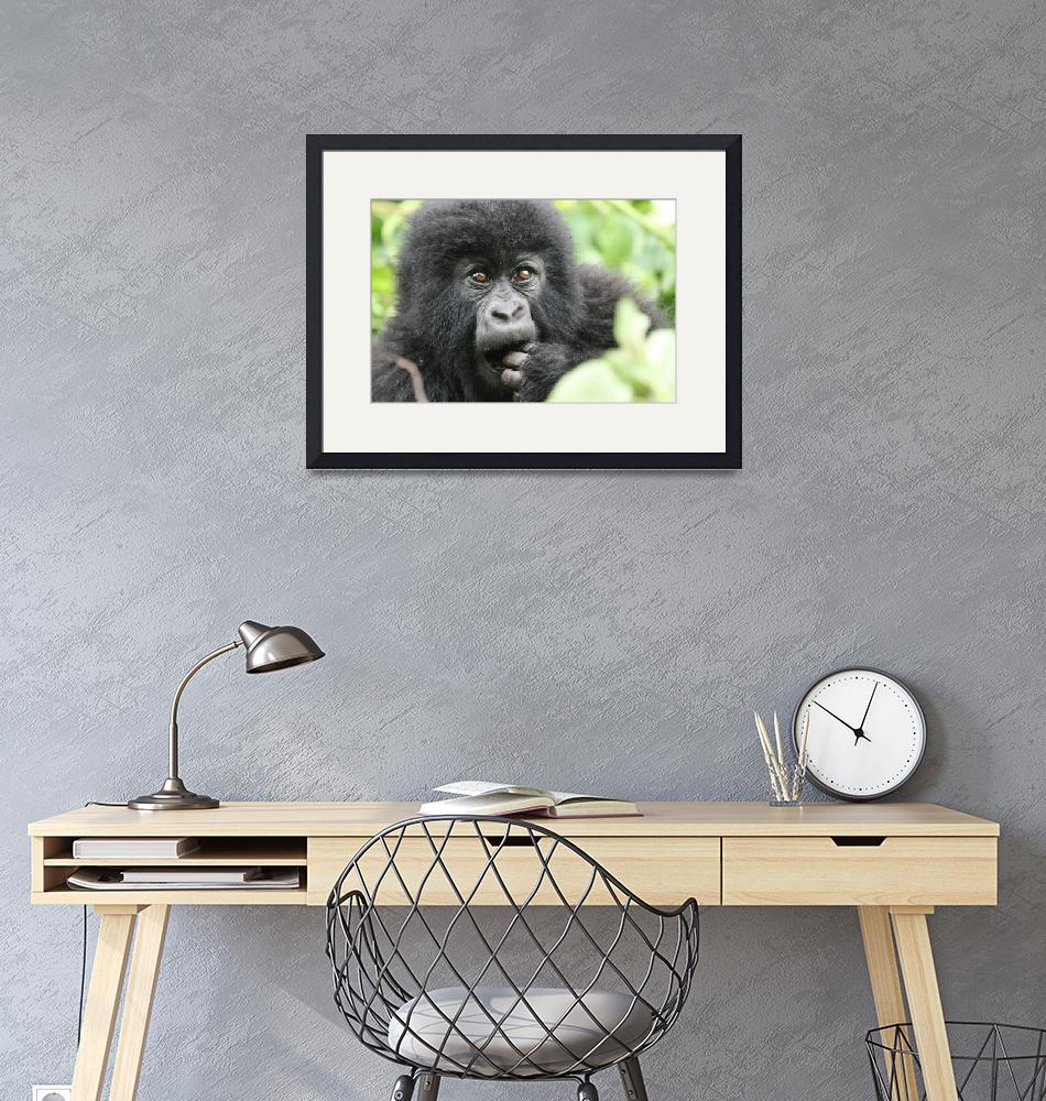 """""""Young Gorilla""""  by DaniSweet"""