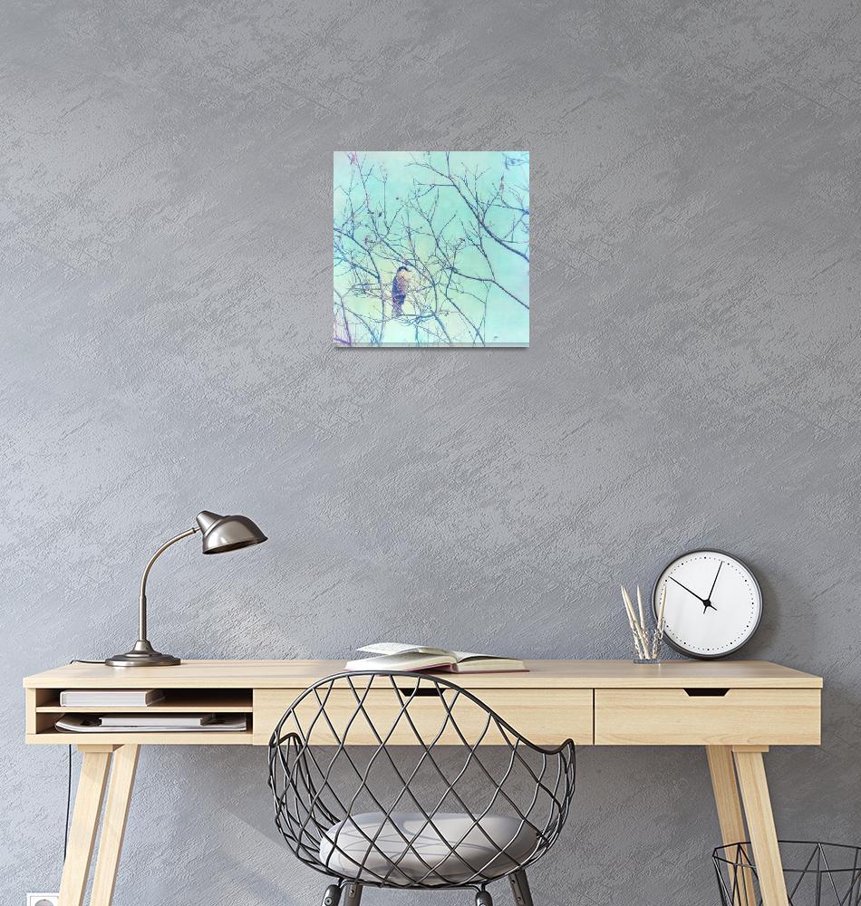 """grey jay in a tree""  by Piri"