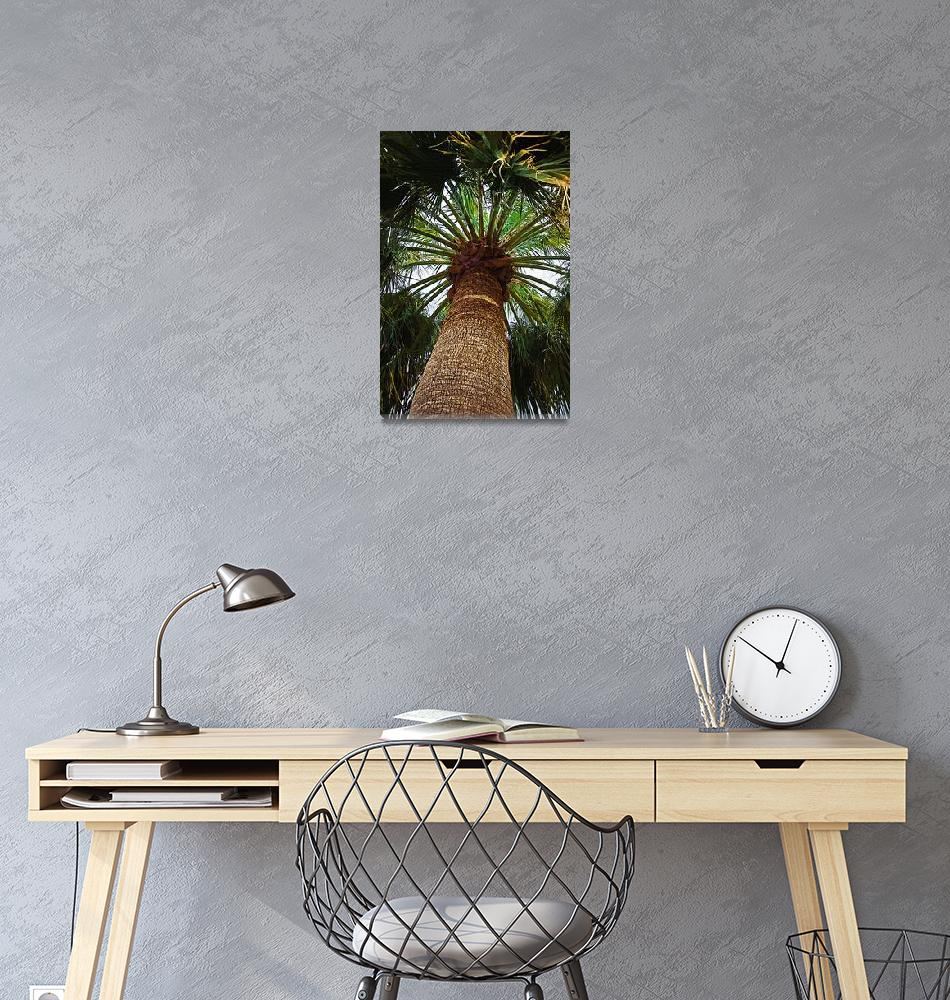 """""""The Big Palm""""  (2014) by Kirtdtisdale"""