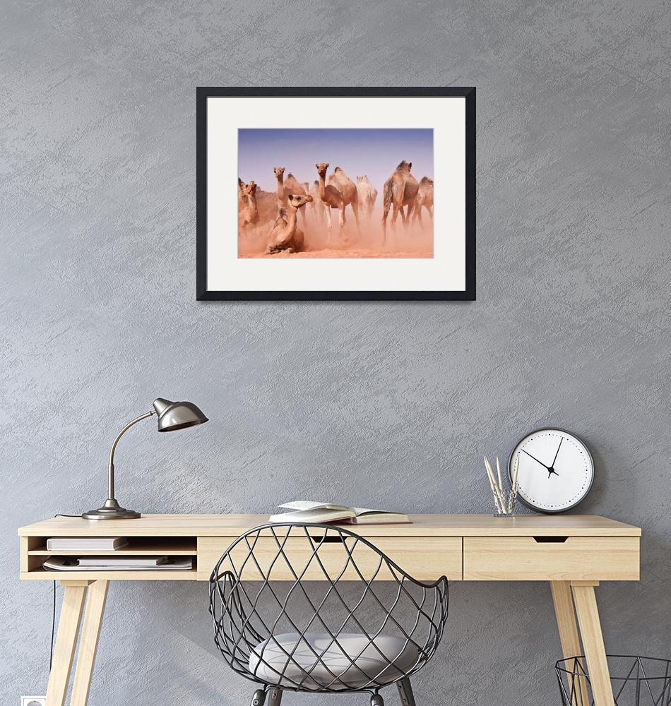 """""""camel""""  (2009) by SaharaPictures"""