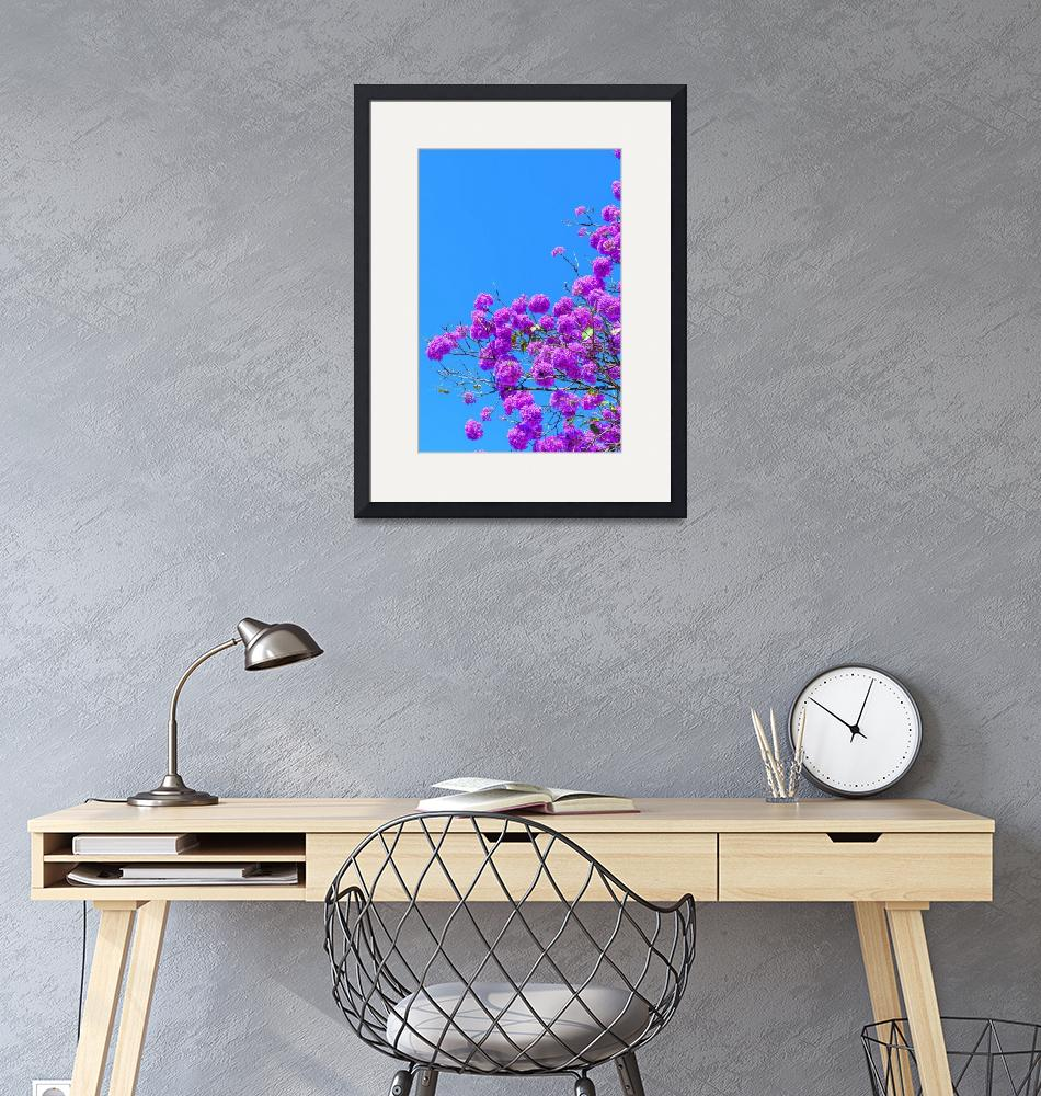 """""""Pink Trumpet under a blue sky""""  (2019) by hpdsgn"""