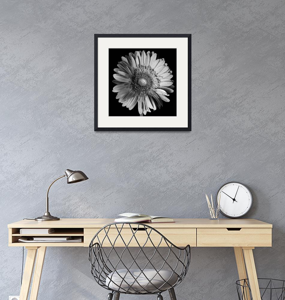 """""""Flower lithograph black""""  (2011) by noelphoto"""