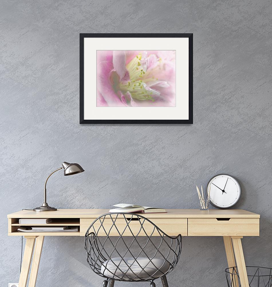 """""""Camelia in pink - water color""""  (2013) by AngelaStanton"""