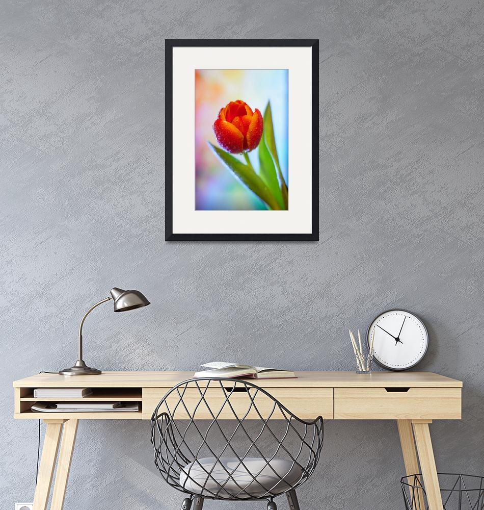 """""""One red tulip""""  by artcomma"""