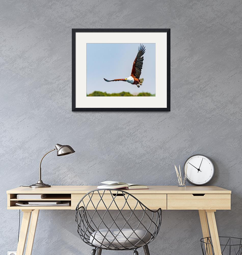 """""""African Eagle in Flight""""  (2016) by mjphoto-graphics"""