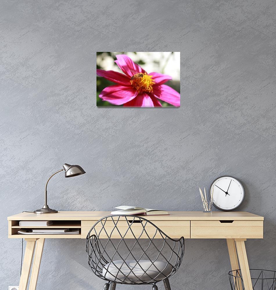 """Bee Pollinating Purple Flower""  (2013) by rhamm"
