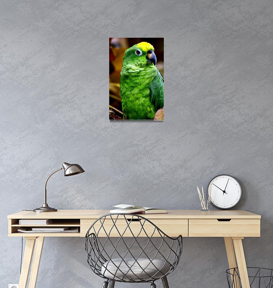 """Little green parrot""  (2013) by DanSteeves"