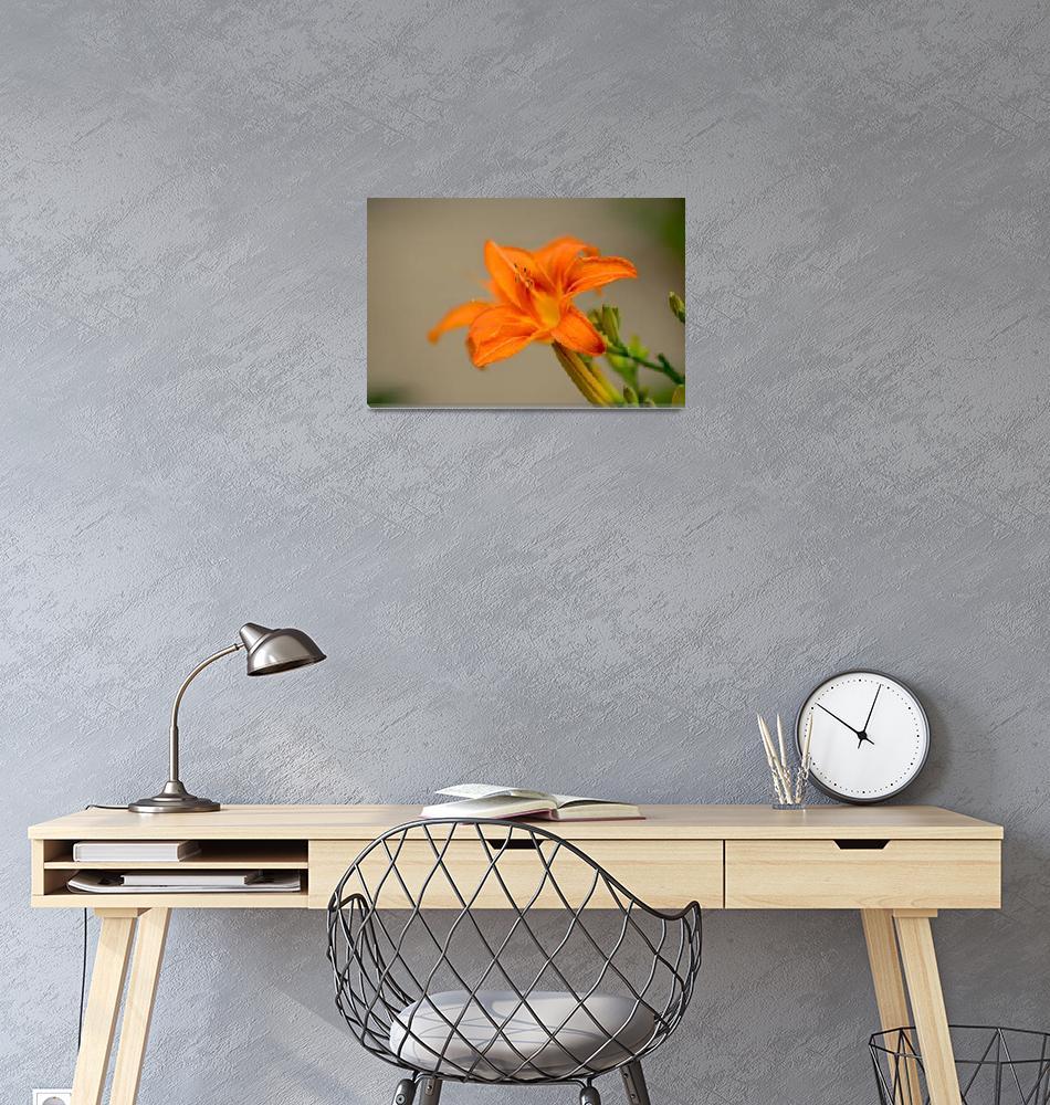 """""""DSC_0010""""  by flowercard"""