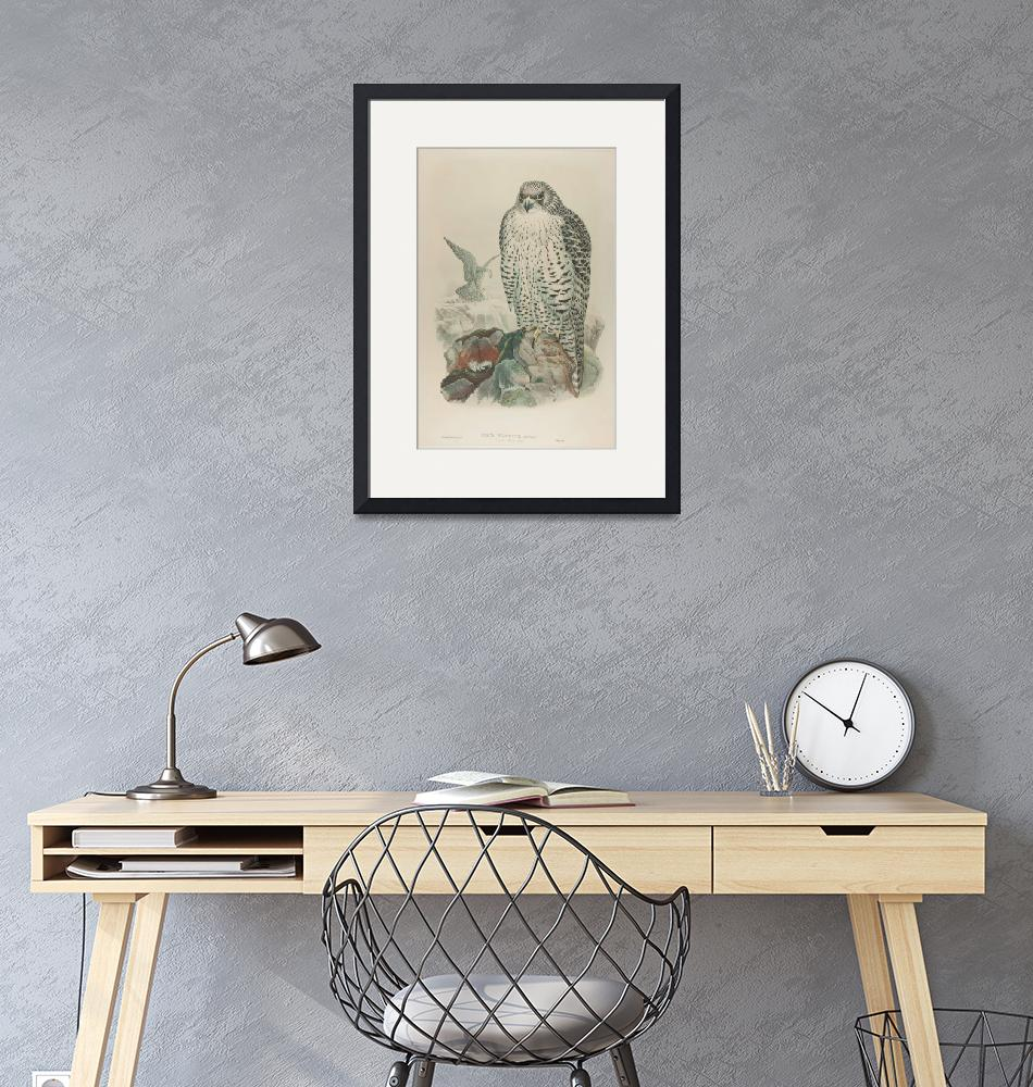 """""""John Gould, Henry Constantine Richter~Lithograph,""""  by Old_master"""