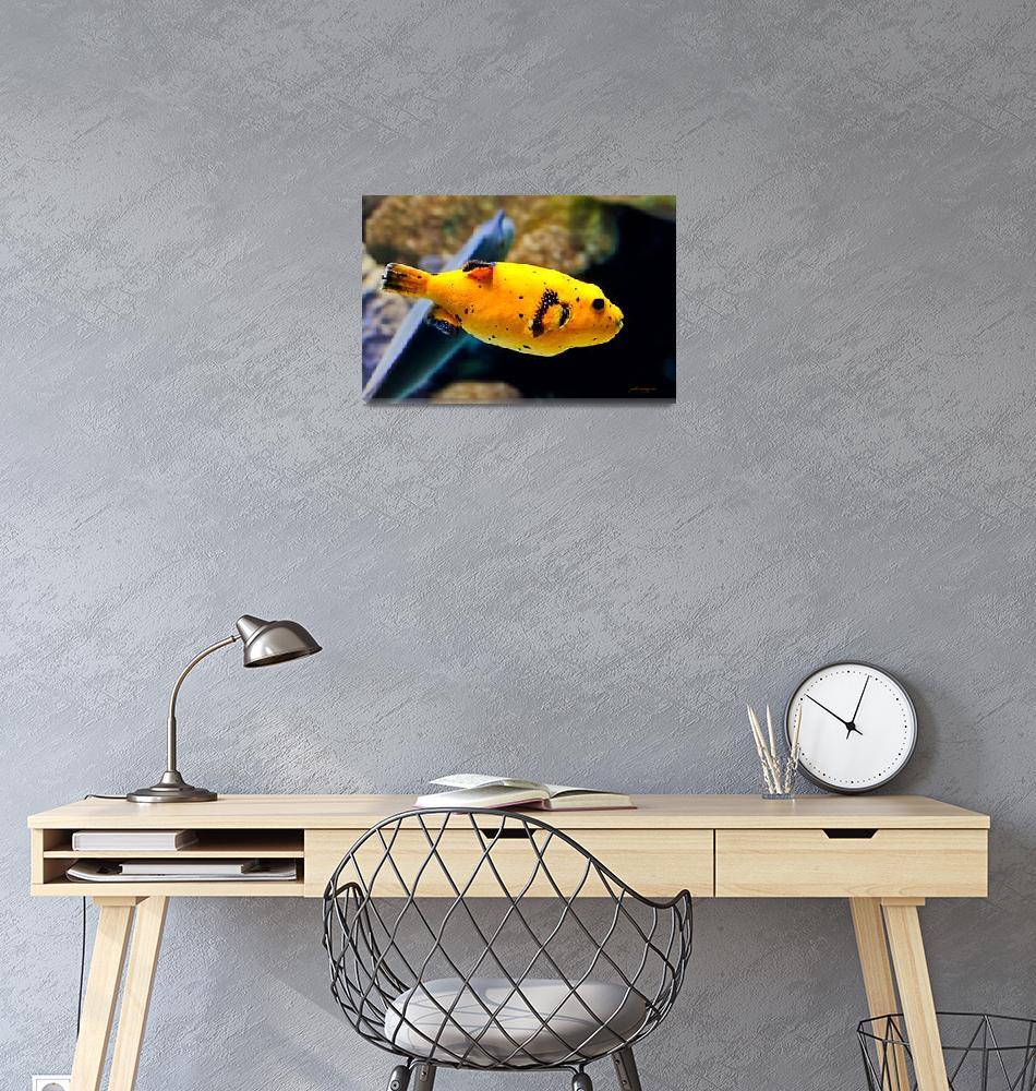 """Guinea Fowl Puffer Fish""  (2010) by johncorney"