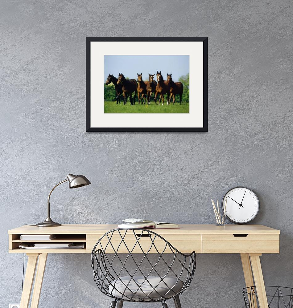 """""""Thoroughbred Yearlings, County Meath, Ireland""""  by DesignPics"""
