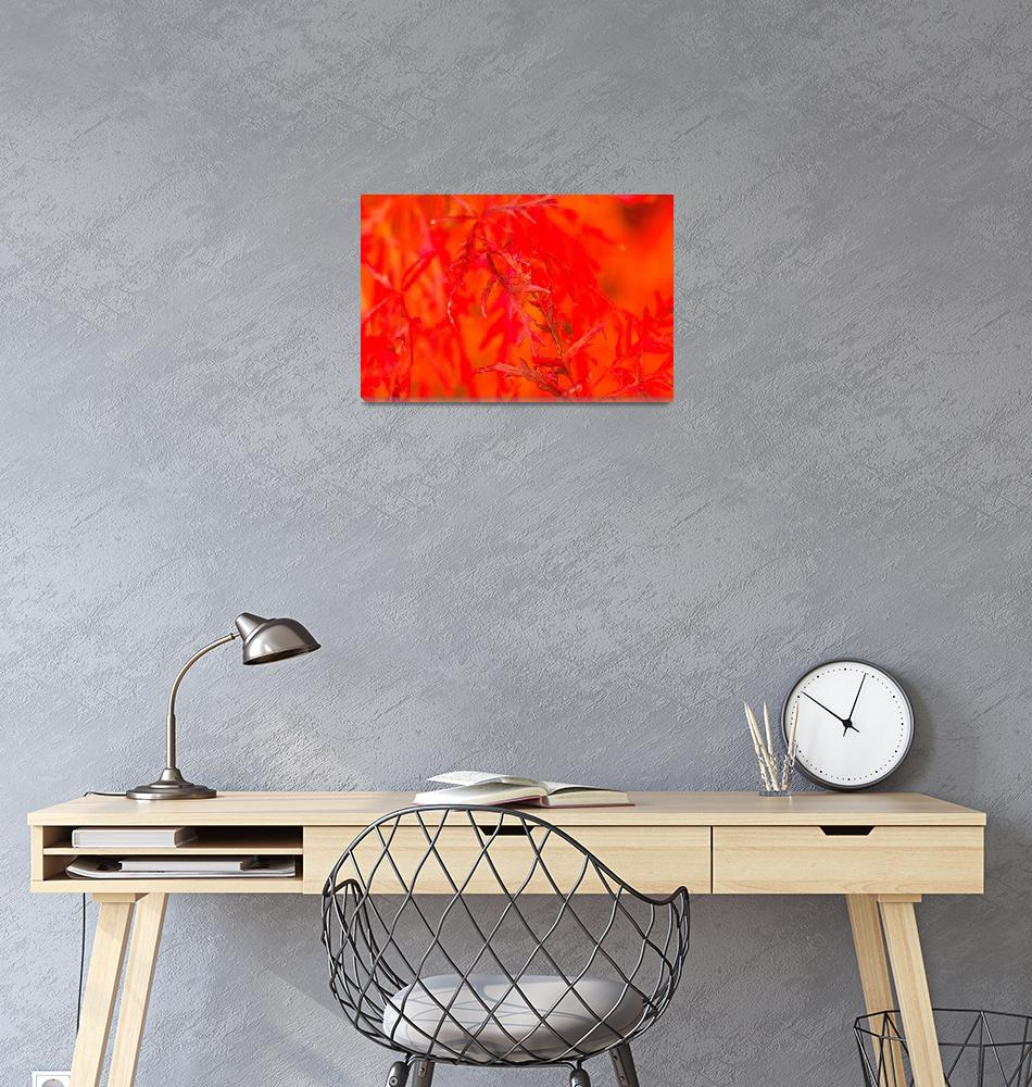 """""""fall fire""""  (2009) by poetryoflight"""