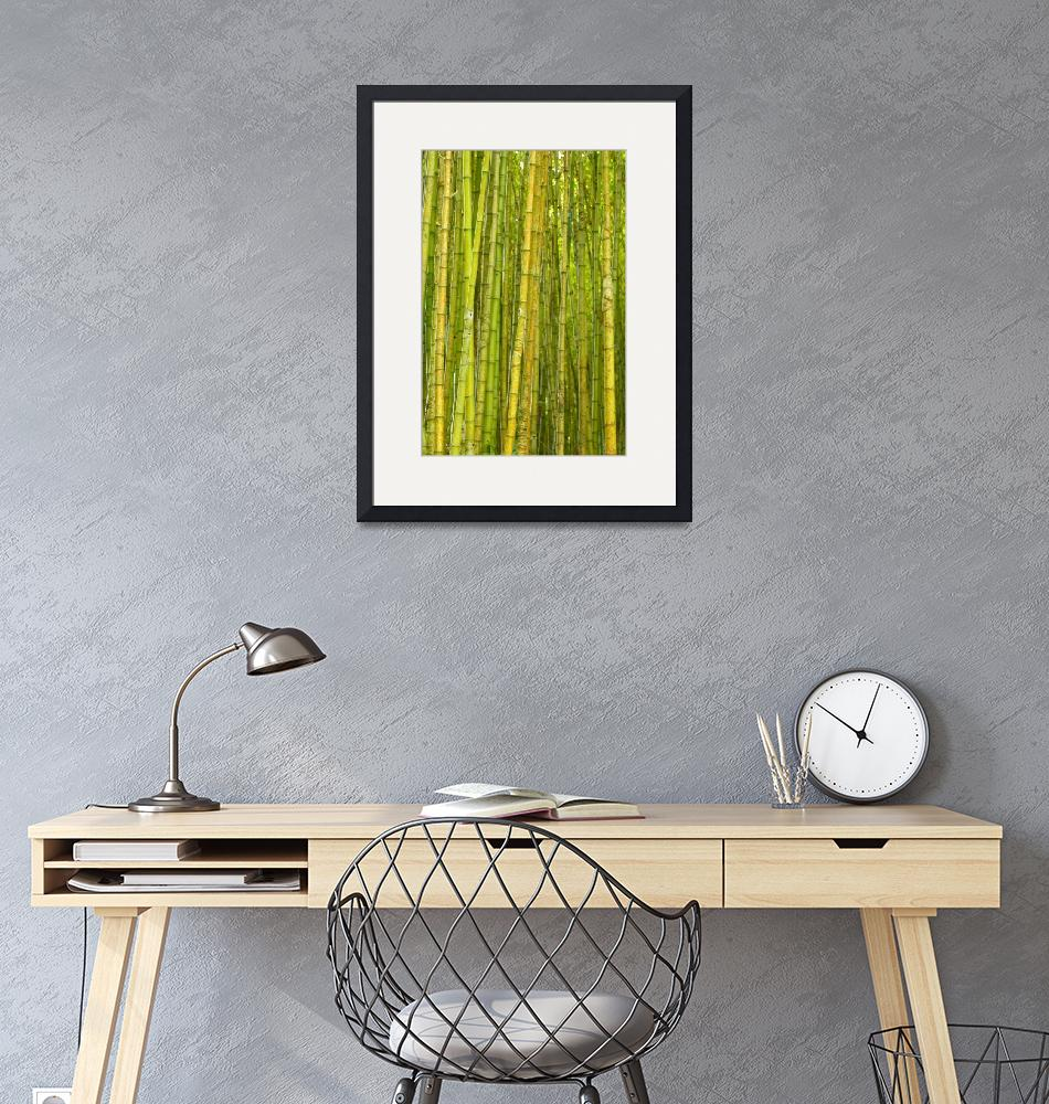 """""""Bamboo forest""""  (2011) by gavila"""