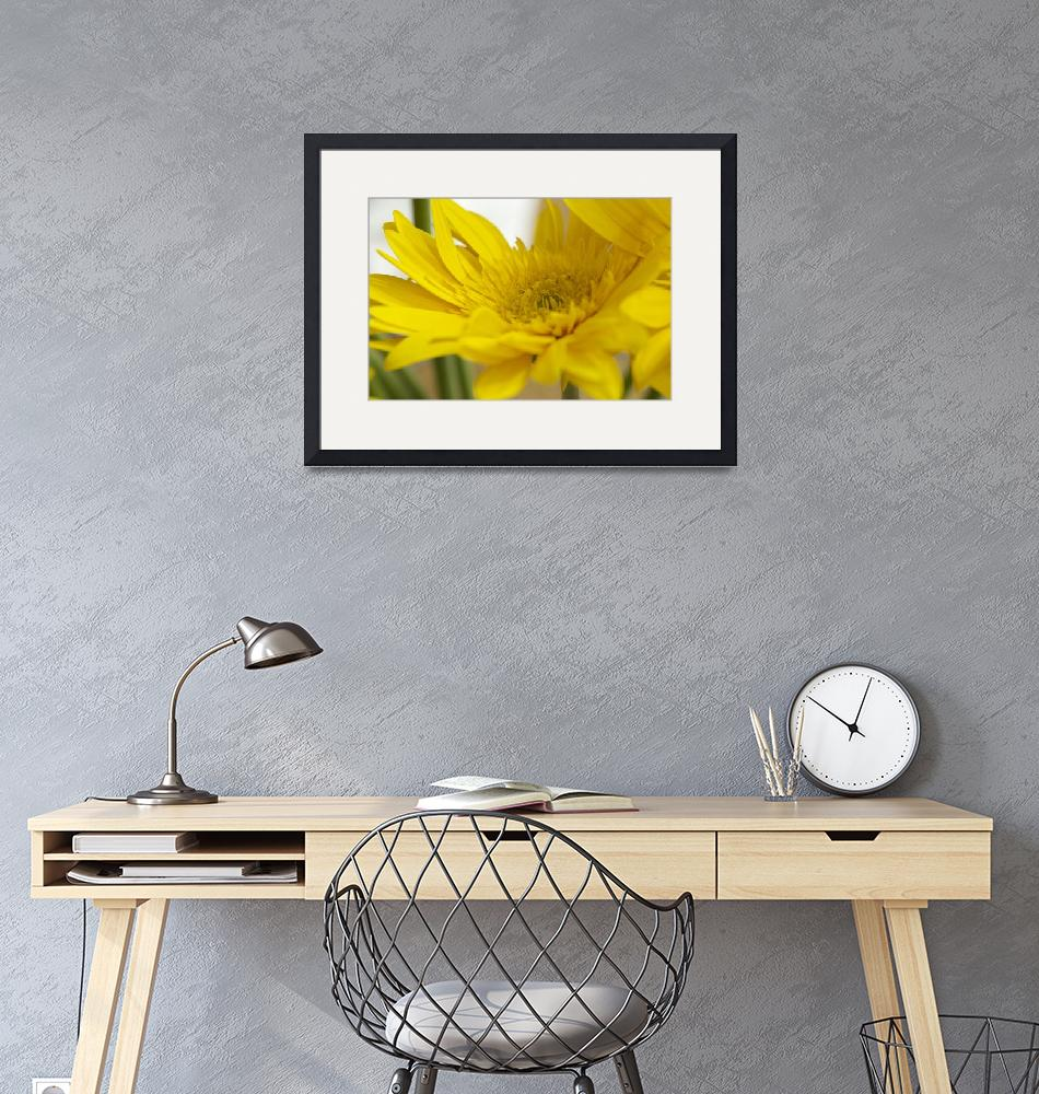 """""""Yellow Flower""""  (2014) by joelrichter"""