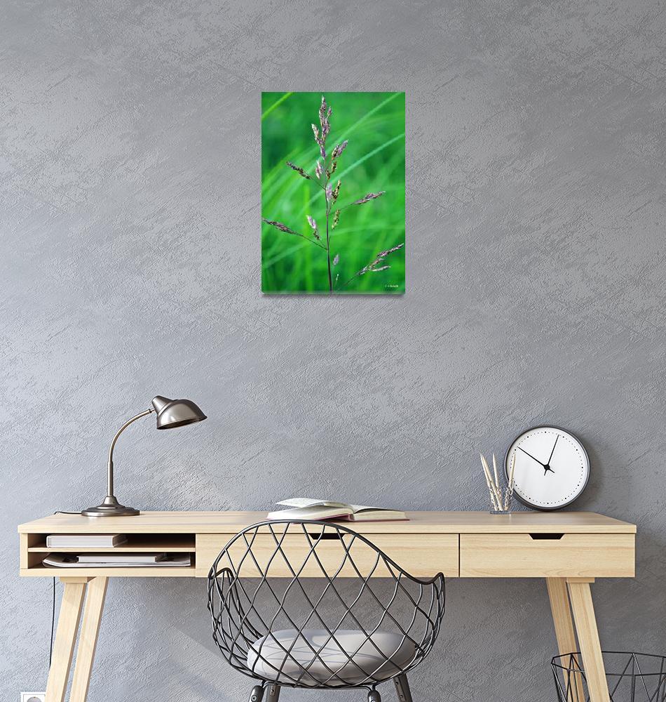 """""""Burgundy Grass 2""""  (2011) by William63"""