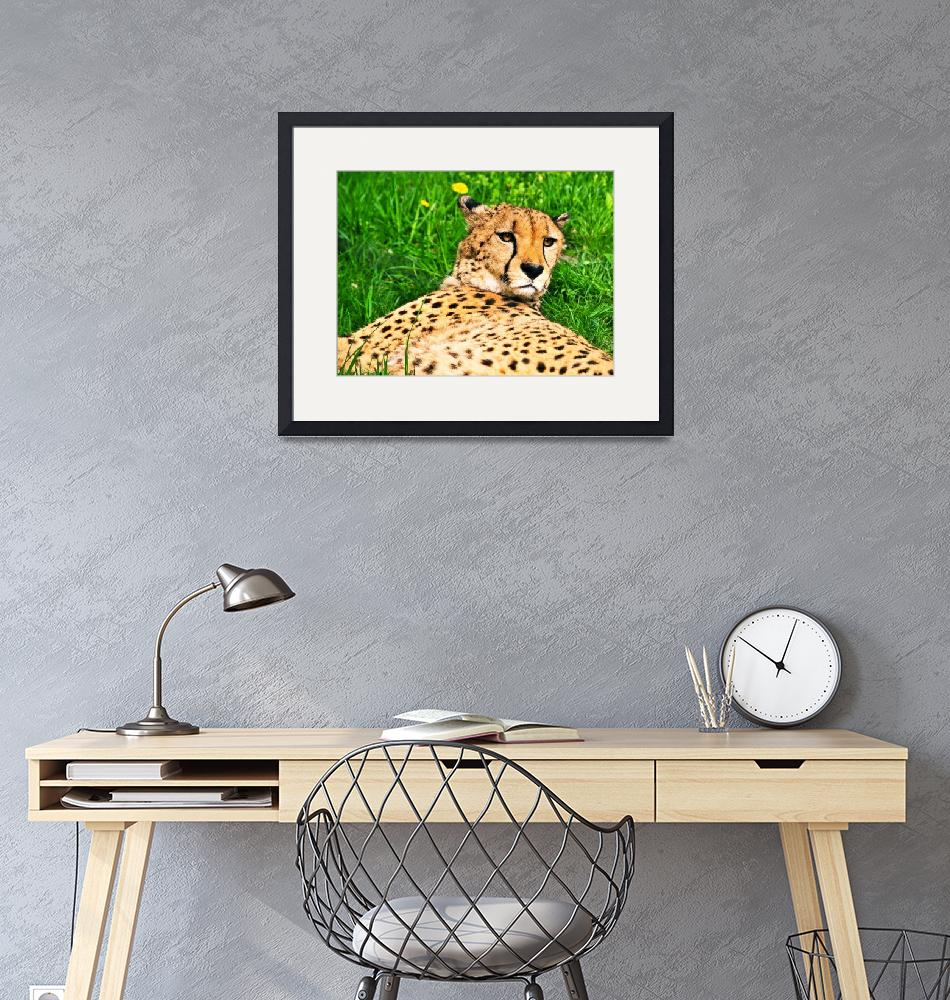 """""""Relaxed Cheetah""""  (2013) by amira"""