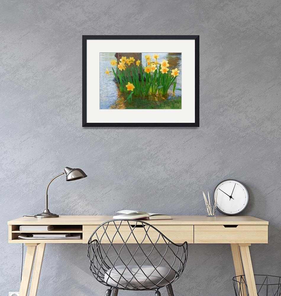 """Large Cupped Daffodil Narcissus""  (2012) by vpicks"