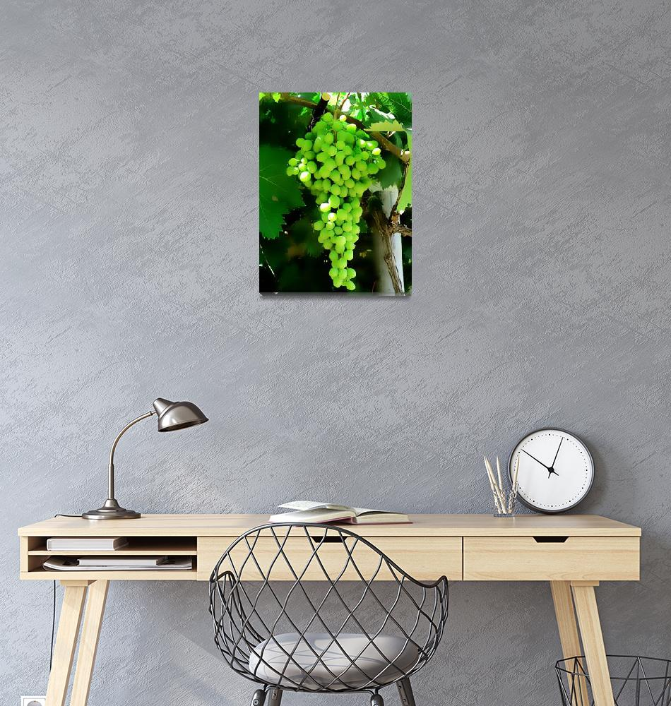 """""""Grapes on the vine""""  (2014) by rottlig"""