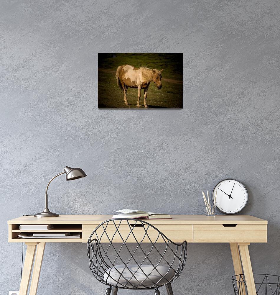 """Beauty of wildlife""  (2018) by robertgrac"
