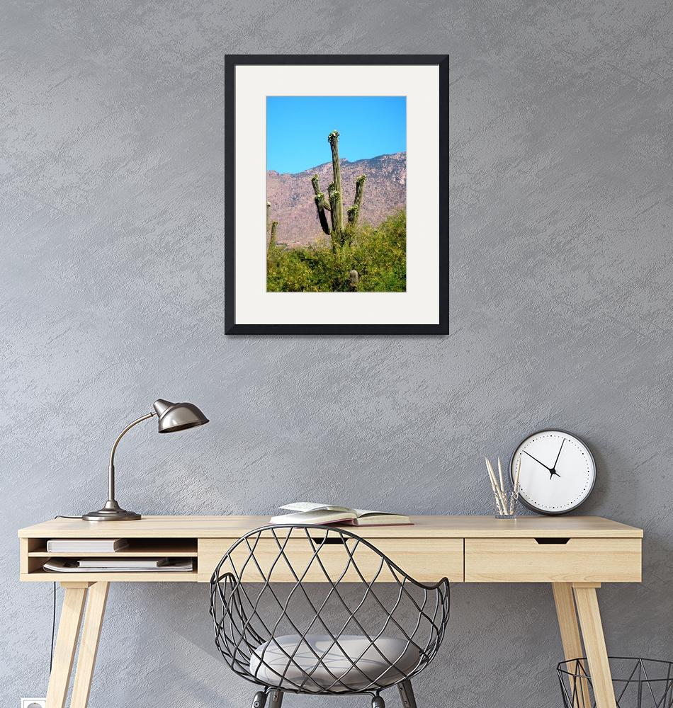 """""""Saguaro with Catalina Mountains""""  (2009) by MyHartArt"""