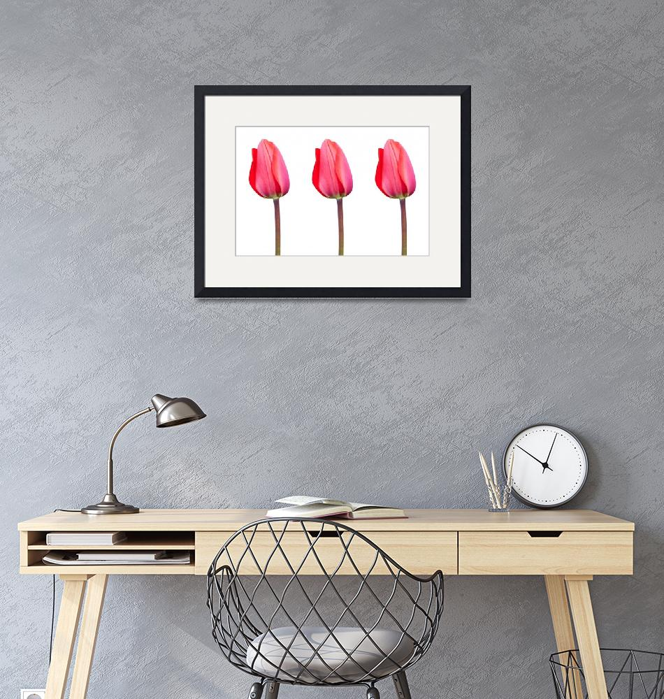 """Three Red Tulips in a Row"" by NatalieKinnear"