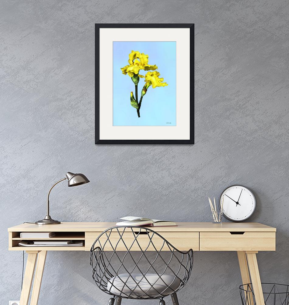 """""""Two Yellow Irises and Buds""""  by susansartgallery"""