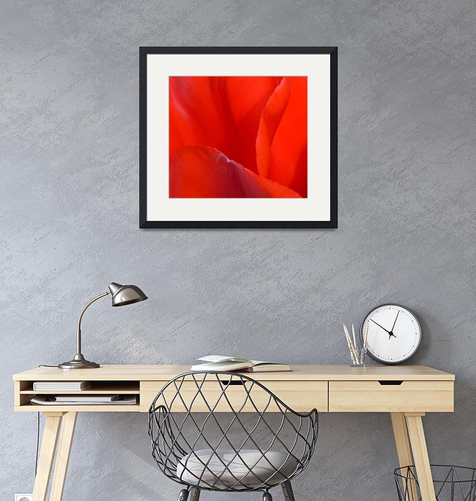 """""Red Tulip 2"" #2042315.0676 (2)""  (2015) by achimkrasenbrinkart"