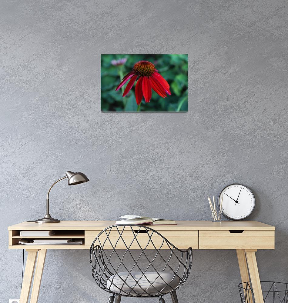 """""""red flower""""  by kaylahontas"""