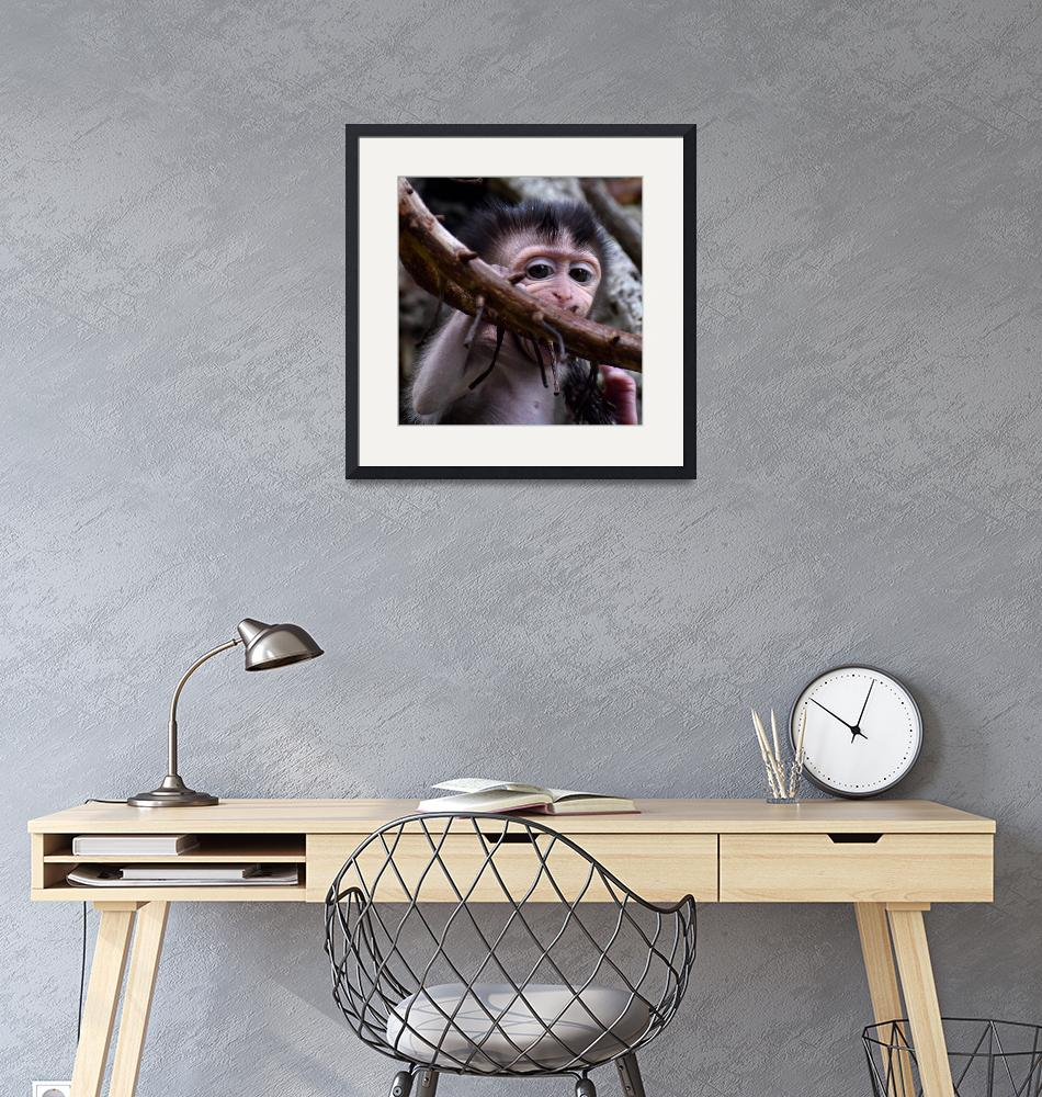 """""""Baby macaque monkey biting a branch"""" (2019) by Mickcarr"""