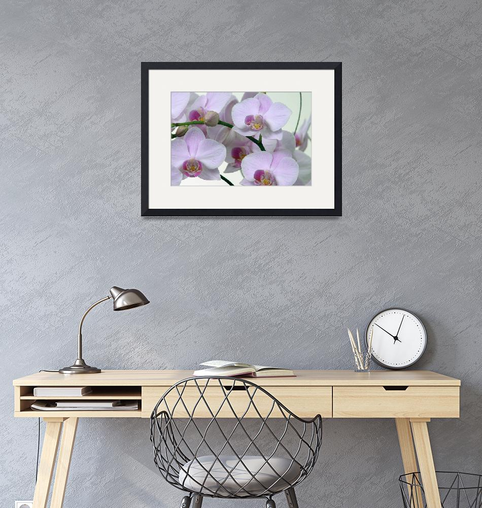 """""""Orchids2""""  by urbanmythx"""