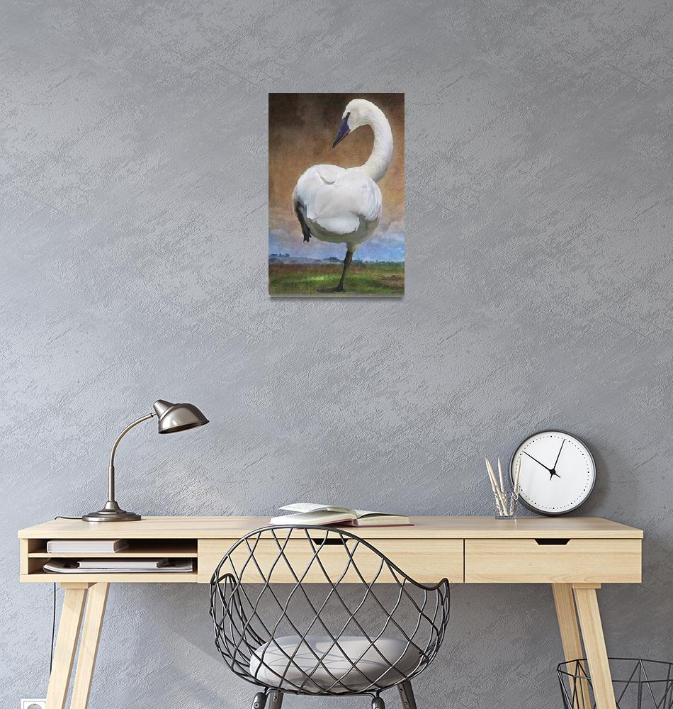 """""""crossing the great plains - trumpeter swan""""  (2011) by rchristophervest"""