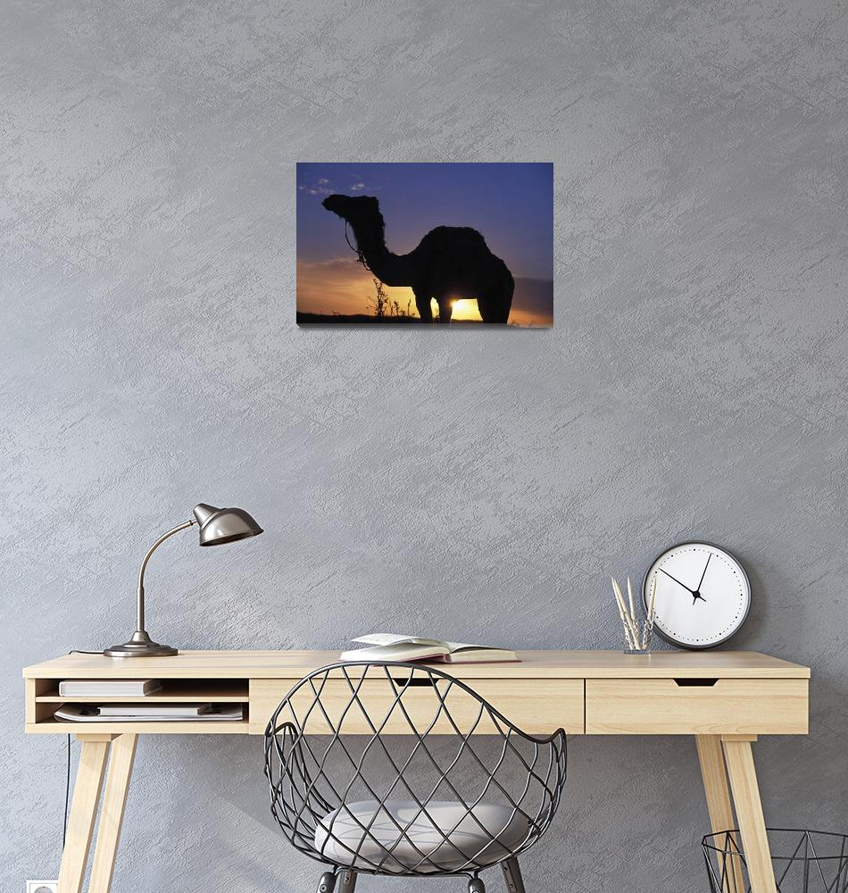 """""""Silhouetted Camel At Sunset. Tunisia""""  by DesignPics"""
