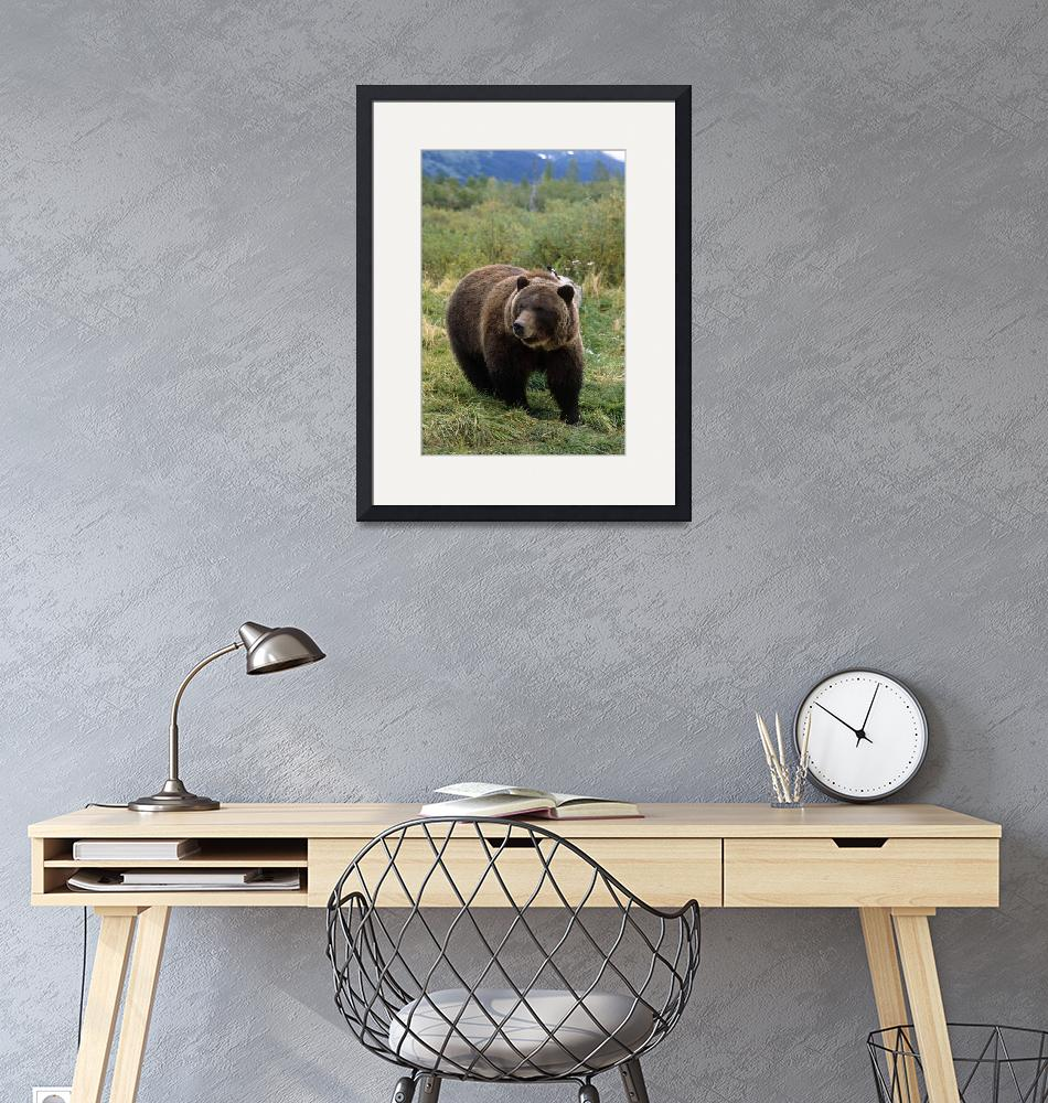 """""""Grizzly bear at the Alaska Wildlife Conservation C""""  by DesignPics"""