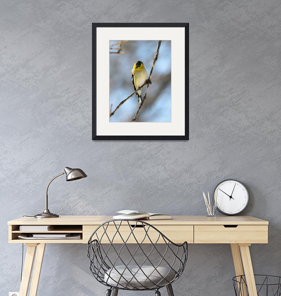 """""""Gold finches""""  by cameragal"""