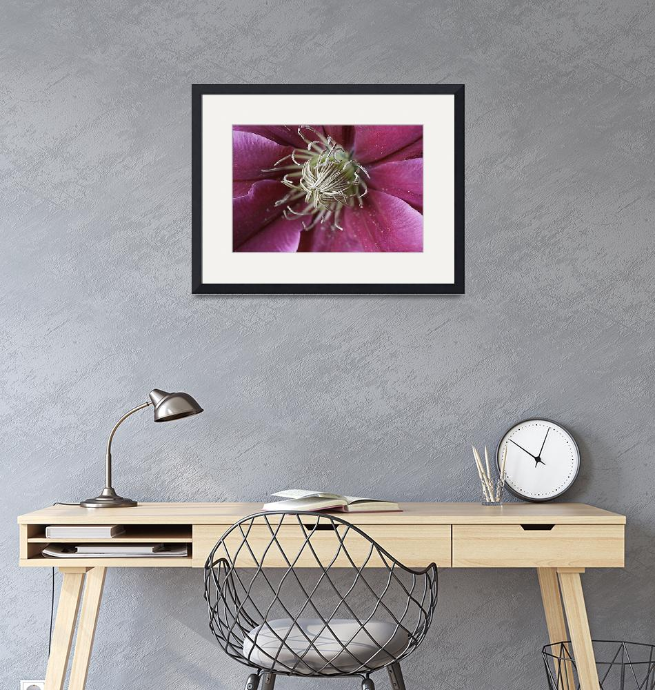 """PINK CLEMATIS 2""  (2013) by edesigns15"