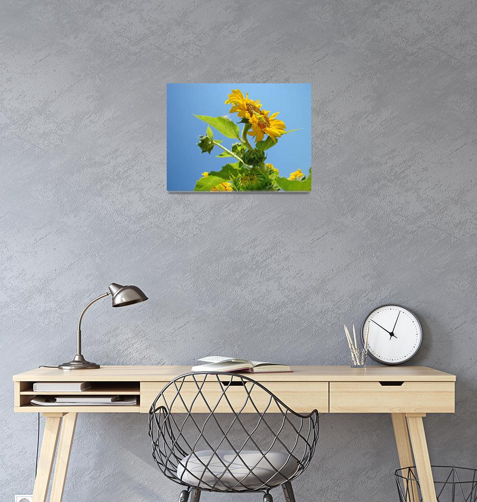 """""""SUNFLOWER Weather Forecast Sunny Baslee Troutman""""  (2009) by BasleeTroutman"""