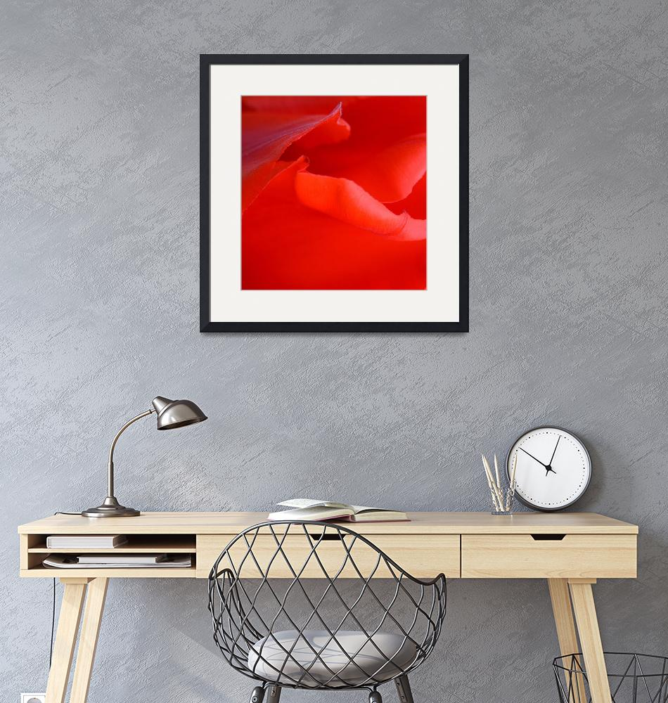 """""Red Tulip 6"" #6042315.0678 (5)"" (2015) by achimkrasenbrinkart"