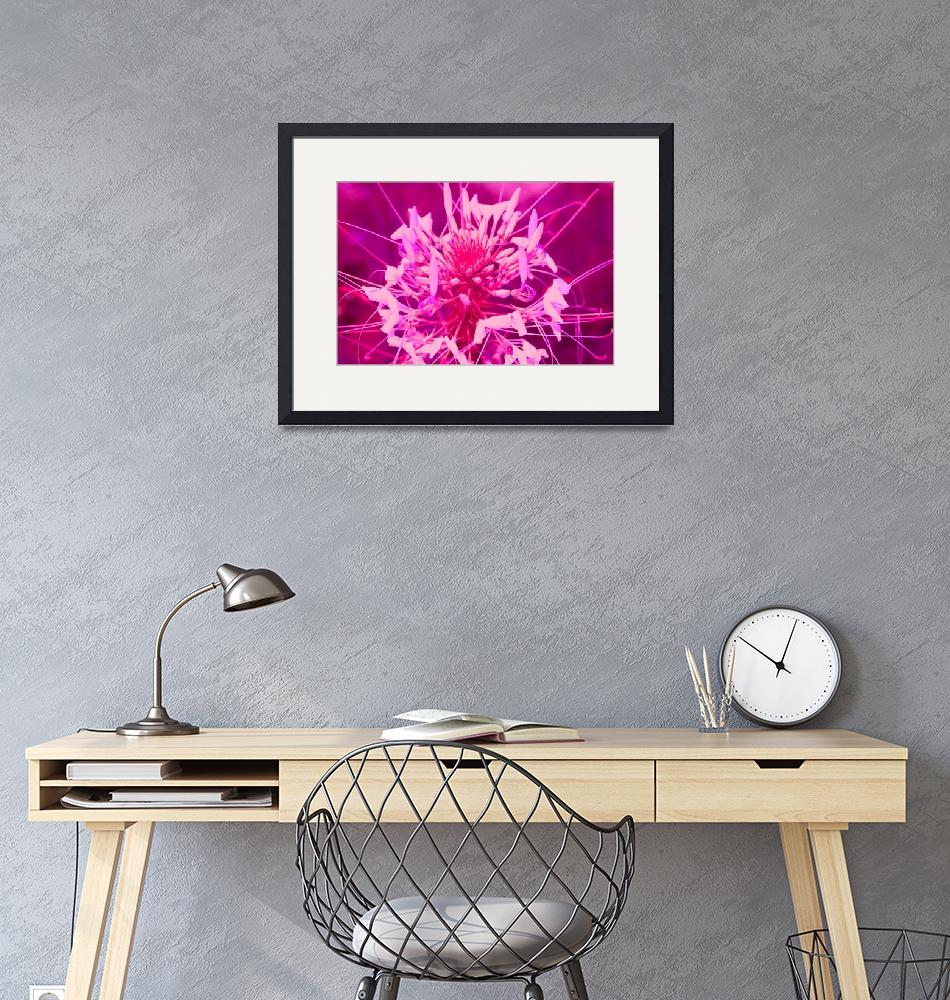 """""""Magenta modified flower.""""  (2015) by easel"""