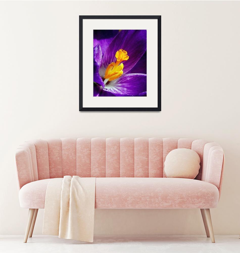 """Purple Crocus""  (2008) by bavosiphotoart"