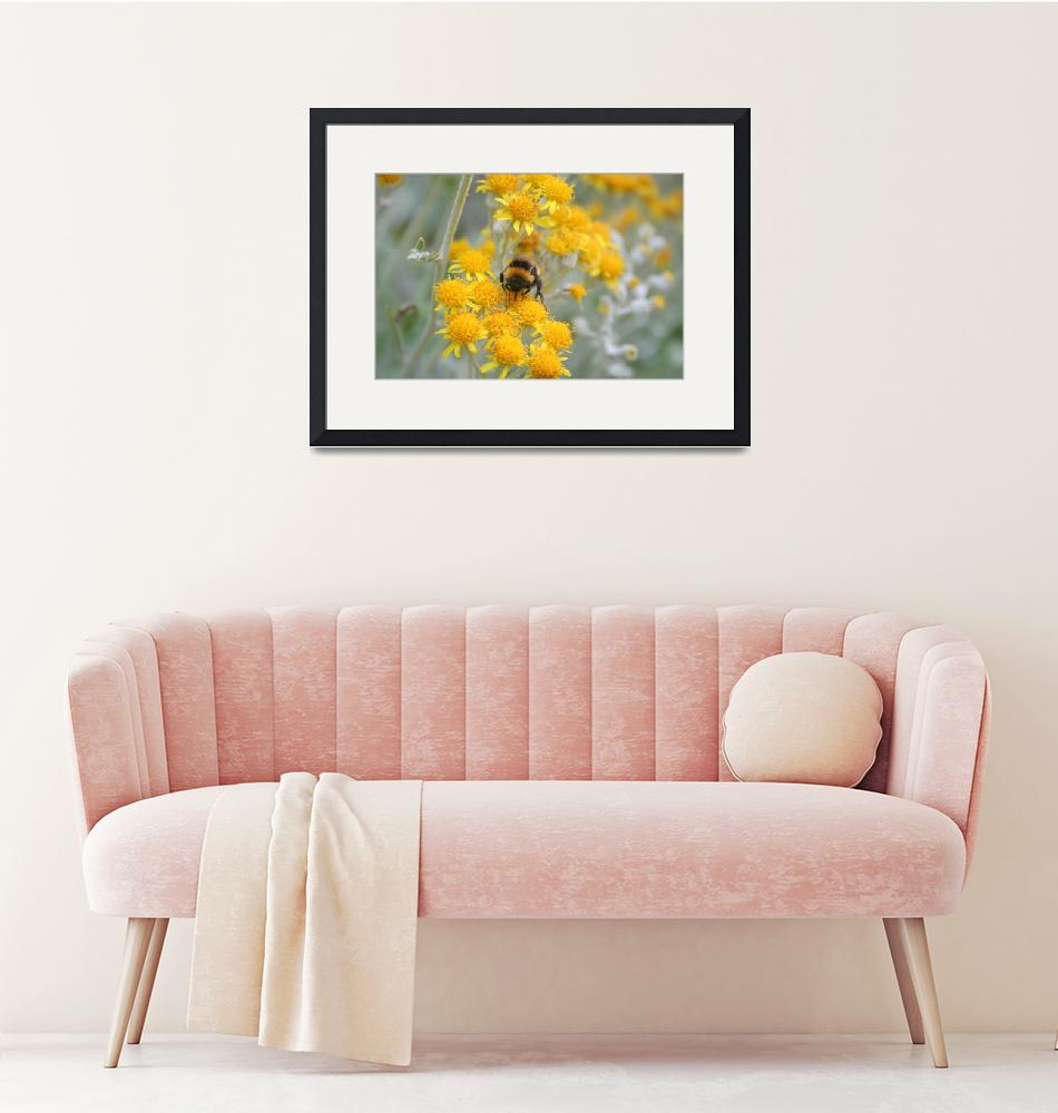 """""""Floral and Bumble 3""""  (2008) by willifindunow"""