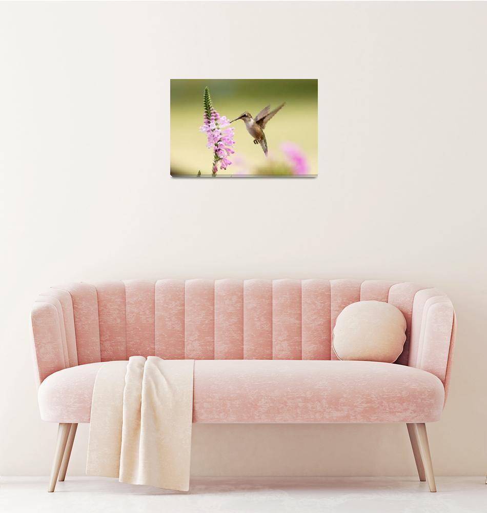 """Hummingbirds""  by cameragal"