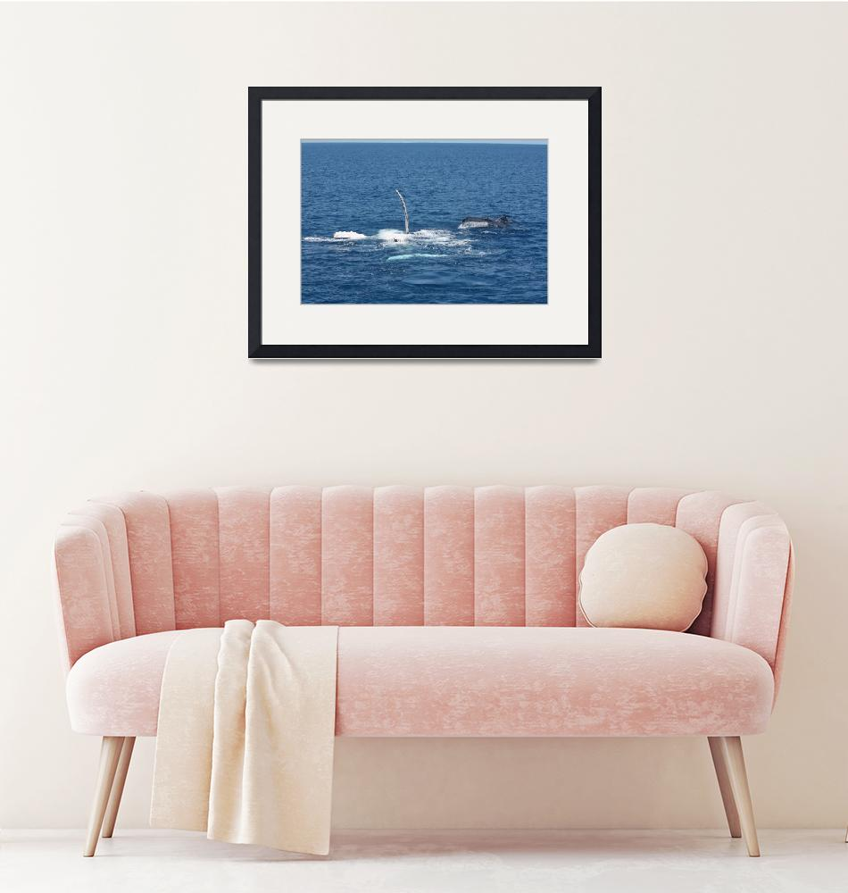"""""""NaP_ Whale Watching156""""  by nevilleprosser"""