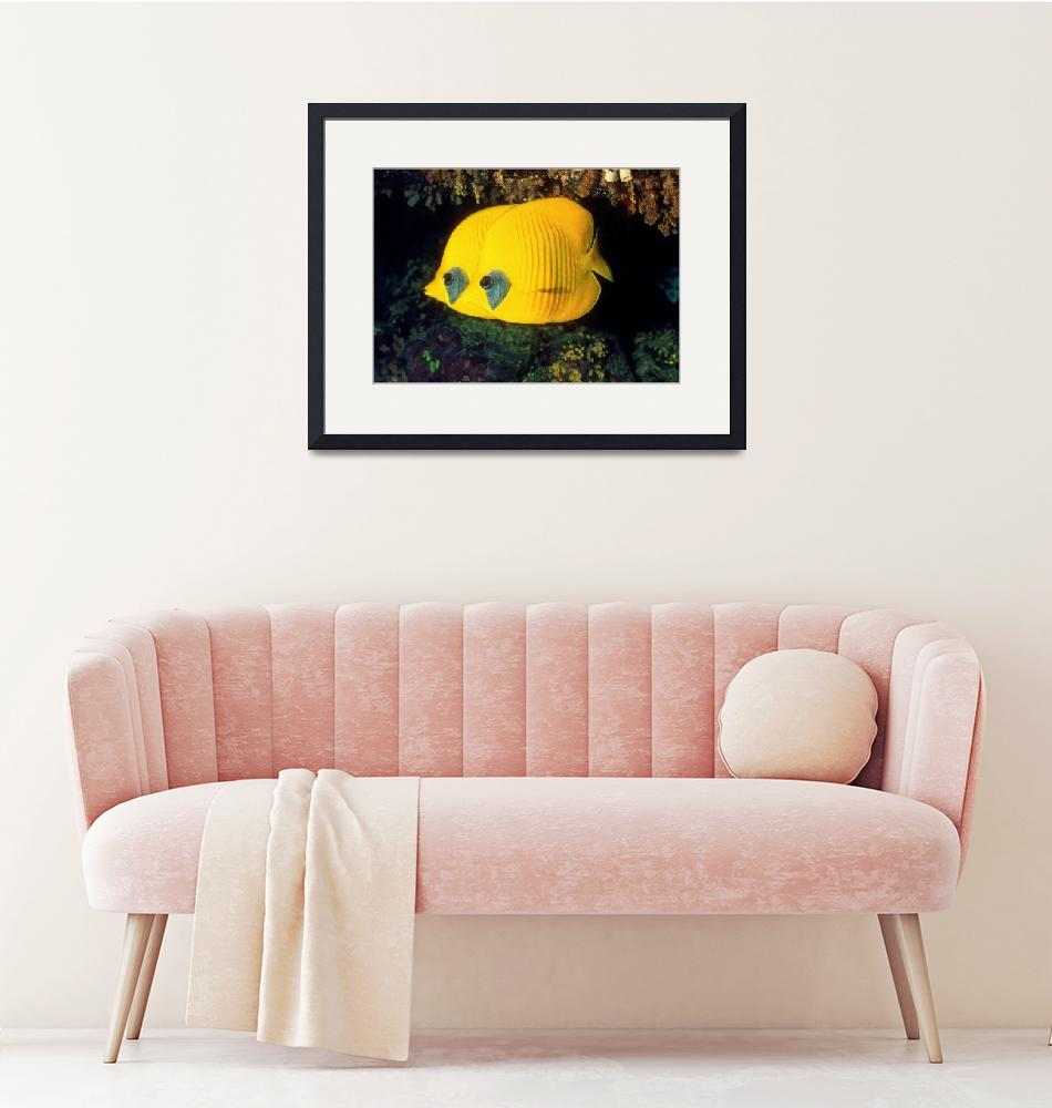 """A Pair of Yellow Disk Fish""  (1995) by JoaoPonces"